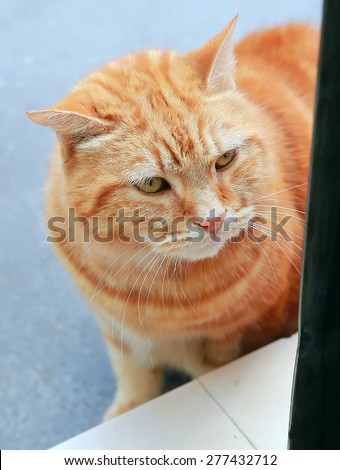 Cat looking in the door - stock photo