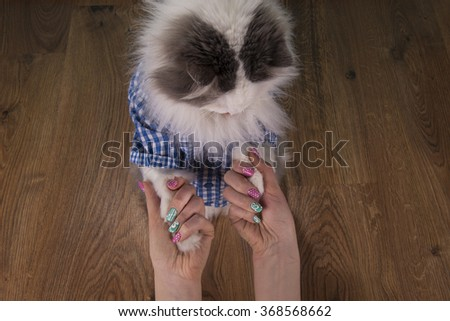 cat looking new manicure his mom - stock photo