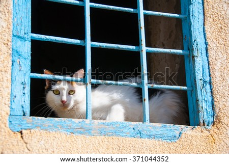 Cat looking out of caged window