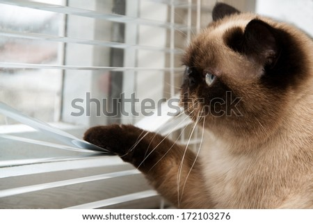 Cat looking outside through window blinds - stock photo
