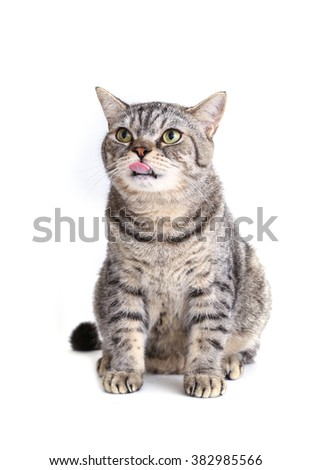 cat looking something with protruding tongue