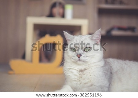cat looking straight