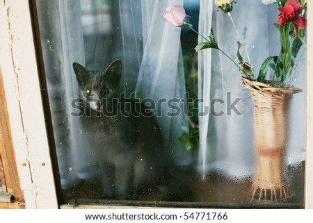 cat looking though window - stock photo