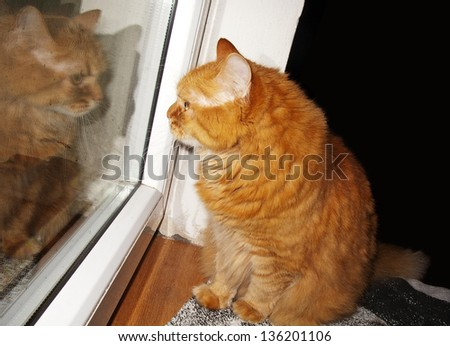 Cat looking through a window, with reflection - stock photo
