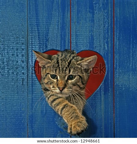 cat looking throw hole in heart shape - stock photo