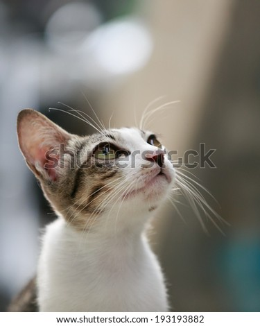 Cat looking to the top - stock photo