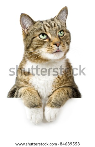 Cat looking up above white banner - stock photo