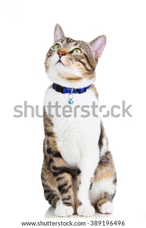 Cat  looking up isolated on white background. - stock photo