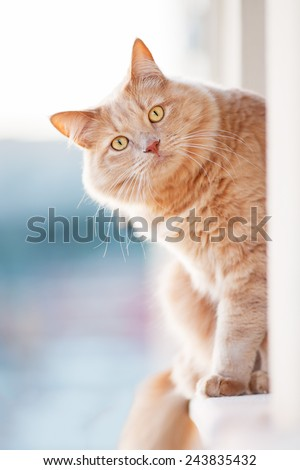 Cat looks curiously - stock photo