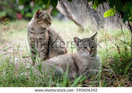 Cat Lovers lying in the grass under the trees looking grilled happy.