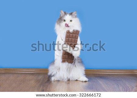 Cat loves to eat chocolate - stock photo