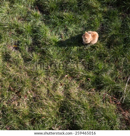cat lurking in garden  - stock photo