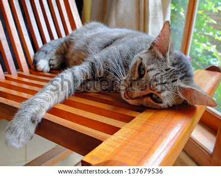 Cat lying at home on a wooden chair. - stock photo