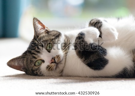 Cat lying down - stock photo