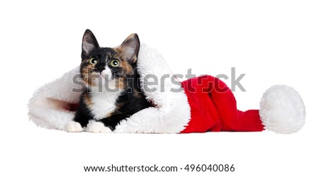 Cat lying in a santa hat on a white background looking up to the copy space area