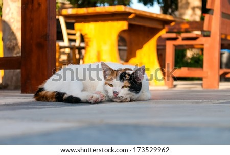 Cat lying in the street near cafe table in sunny day - stock photo