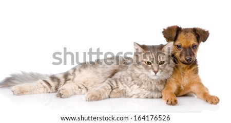 cat lying near puppy. isolated on white background