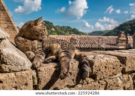 Cat lying on a stone wall - stock photo