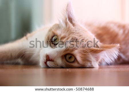 Cat lying on an floor. It is also an example of selective focus photography. - stock photo