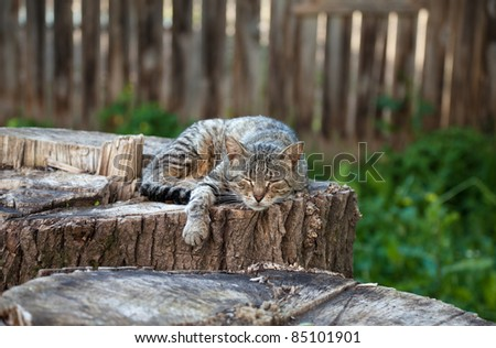 Cat lying on an old stump - stock photo