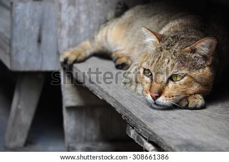 cat lying on floor - stock photo