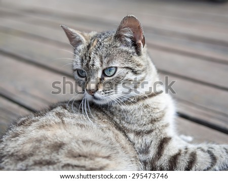 Cat lying on o wood watching soft colours - stock photo