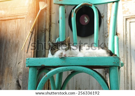 cat lying on the chair - stock photo
