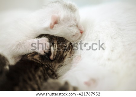Cat lying on the floor and breastfeeding the kittens - stock photo