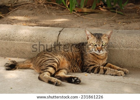 cat lying on the sidewalk