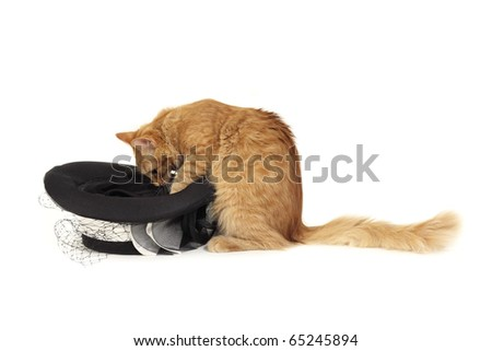 cat magician with hat isolated on white background - stock photo
