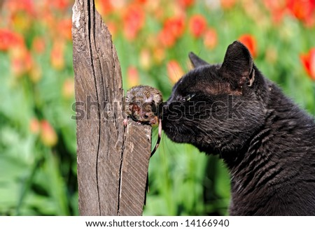 Cat, Mouse - stock photo
