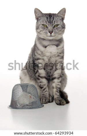 Cat mouse and mousetrap, on white background.