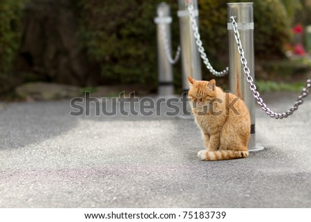 Cat nap - stock photo