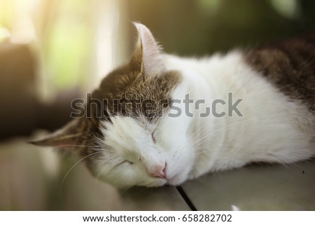 cat nap sleeping on the warm car close up photo on summer outdoor background