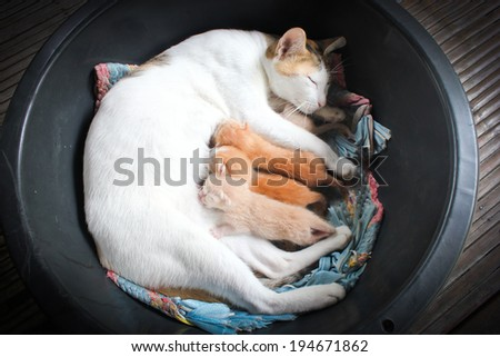 Cat nursing her kittens.The cat feeds a kittens - stock photo