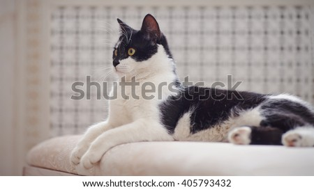 Cat of a black-and-white coloring lies - stock photo