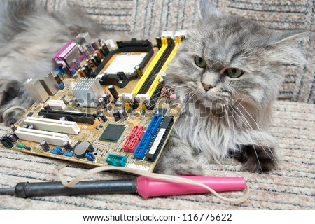 Cat ?omputer support engineer.