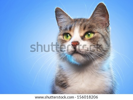 Cat on a blue background - stock photo