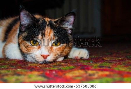 cat on a carpet