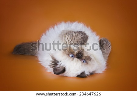 cat on a colored background isolated - stock photo