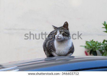 Cat on a light background, on the roof of the car.