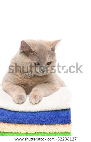 Cat on a stack of clean colorful towels, isolated in white