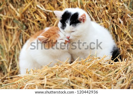 Cat on a straw - stock photo