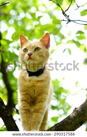 Cat on a tree - stock photo