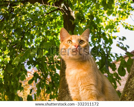 Index furthermore Cat tree additionally Cat tree moreover  on stock illustration cat tree branch street flat design cartoon
