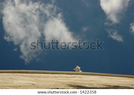 Cat on a wall - stock photo