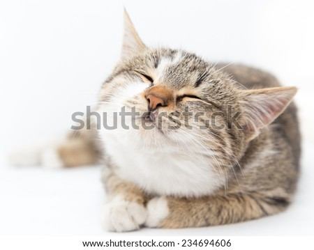 cat on a white background - stock photo