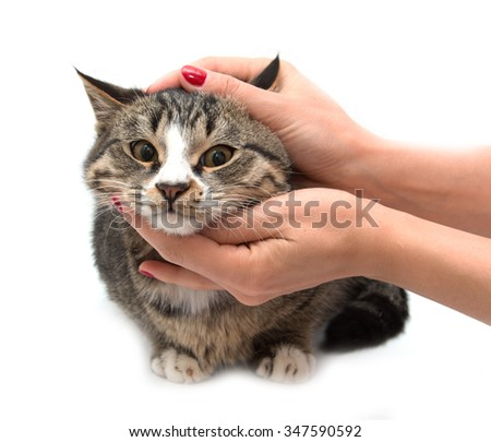 Cat on a white background with a hand - stock photo
