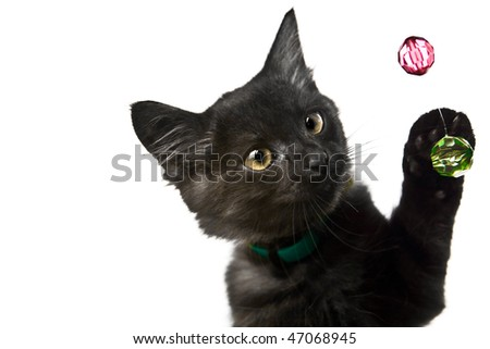 cat on background - stock photo