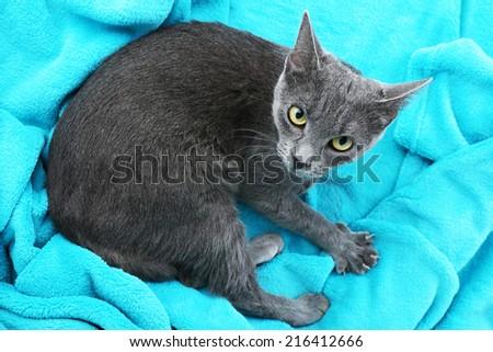 Cat on blue fabric background closeup - stock photo